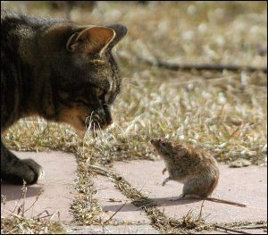 cat-and-mouse-jpg