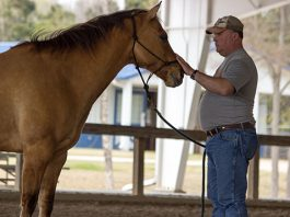 Lander University to Offer Equine Therapy to Veterans With PTSD