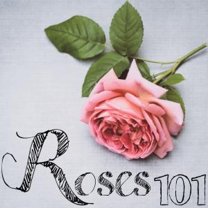 Roses 101